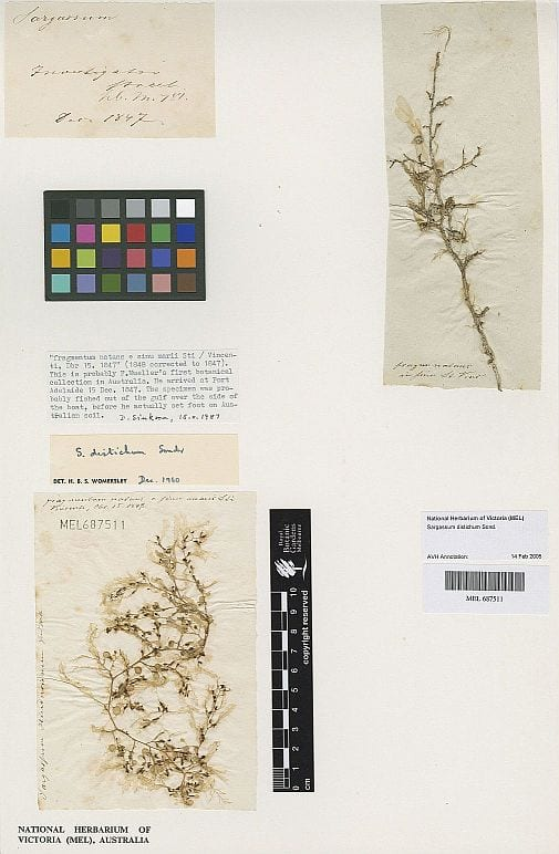 Mueller's first botanical collection in Australia