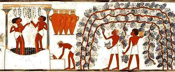 Grape picking in ancient Egypt