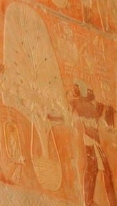 Relief showing a tree being transported from Punt to Egypt; from Deir el Bahari in the Mortuary Temple of Hatshepsut, pharaoh of  the eighteenth dynasty of Ancient Egypt reigning from c. 1479 to 1458 BC. (Courtesy of Wikipedia)
