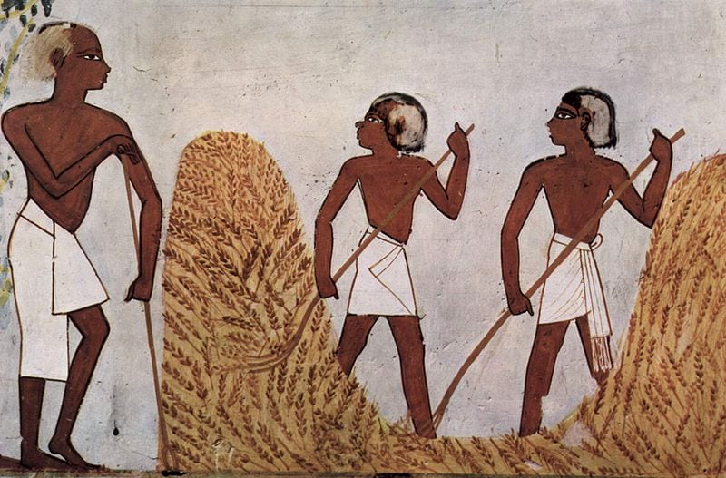 Egyptian cereal farmers c. 1422-1411 BCE