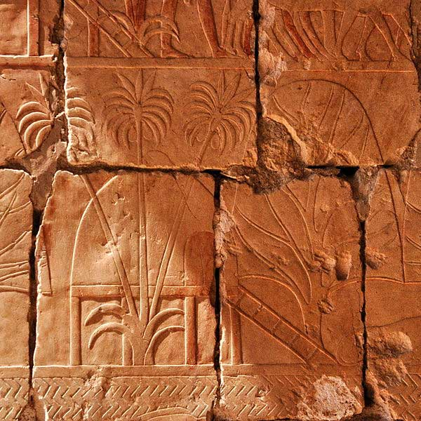 Relief showing plants from Hatshepsut's expedition to Punt