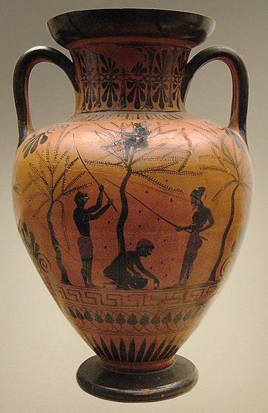 Scene of olive-gathering by young people. Attic black-figued neck-amphora, c. 520 BCE