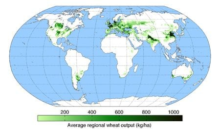 Wheat poduction map